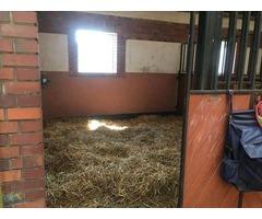 Pensjonat dla koni z dużą halą