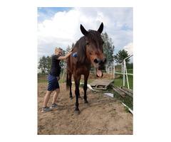 Zoofizjoterapia koni