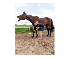 Fizjoterapia koni
